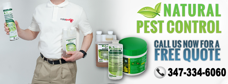 Natural Pest Control NYC | Organic Pest Control NYC - banner