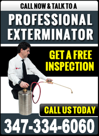 Pest Control NYC | Pest Control Service Contract NYC - cta